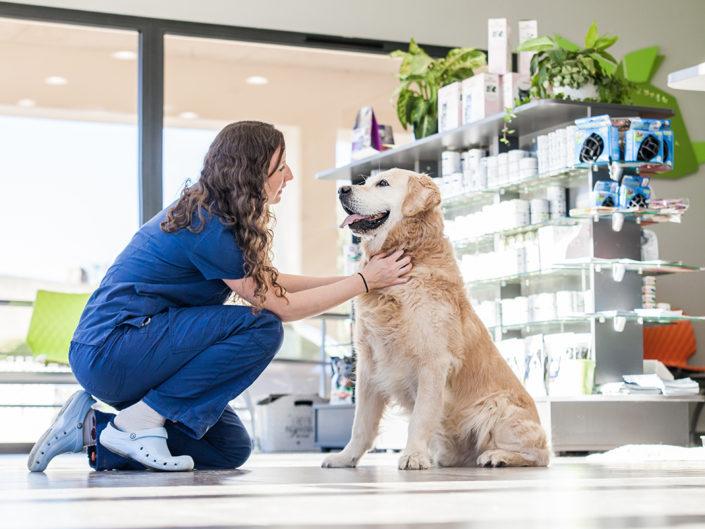 la Clinique vétérinaire de La Souris Verte